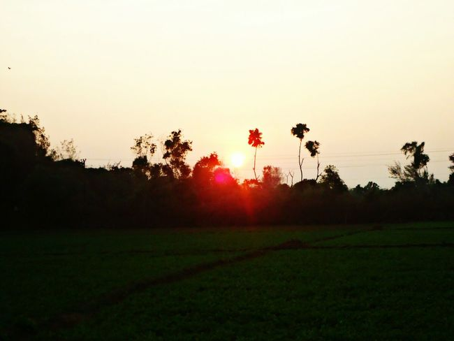Sunset Pink Sky