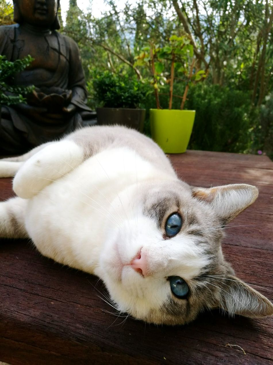 I am unsure what these amazing eyes want to tell me... 🐱💙 One Animal Mammal Animal Themes Pets Domestic Animals Close-up No People Soller Mallorca Nature_perfection Beauty In Nature Animal Eye Cats Of EyeEm Cats Of The Day Amazing Eyes My Year My View Adapted To The City Long Goodbye