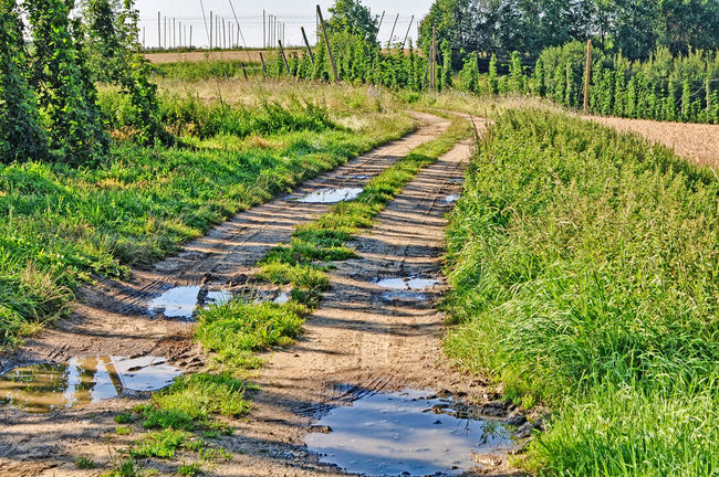between hop fields Absence Agriculture Cart Track Composition Day Diminishing Perspective Farm Farm Road Field Field Road Grass Green Green Color Landscape Leading Narrow Outdoors Perspective Railroad Track Remote Rural Scene Surface Level The Way Forward Track Tree