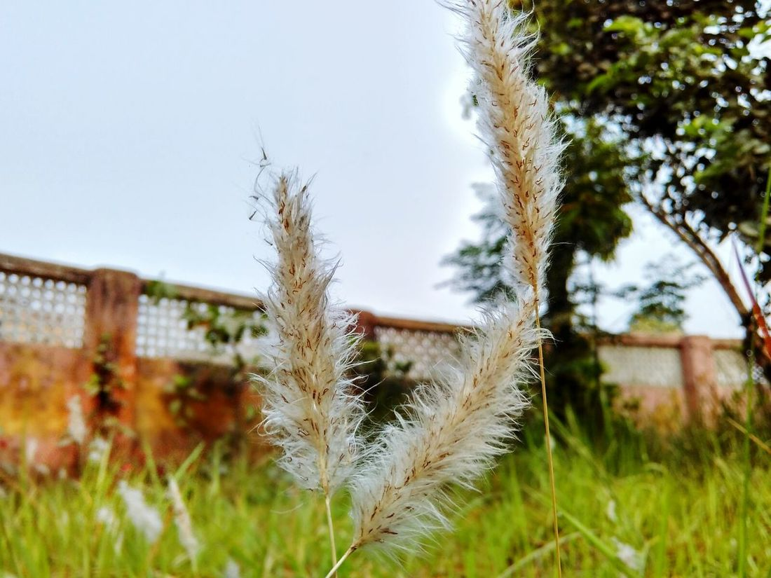 Dont Know The Real Name Look Like Flower But Not Clicked In Morning Gaurden Edited On EyeEm
