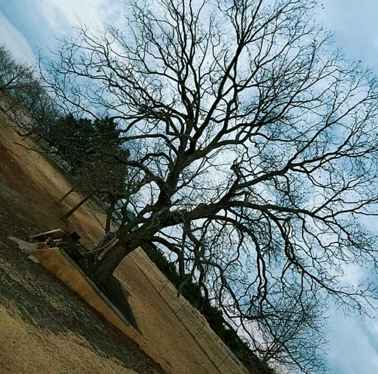 tree, bare tree, sky, architecture, low angle view, built structure, cloud - sky, branch, no people, building exterior, day, outdoors, nature, beauty in nature, city