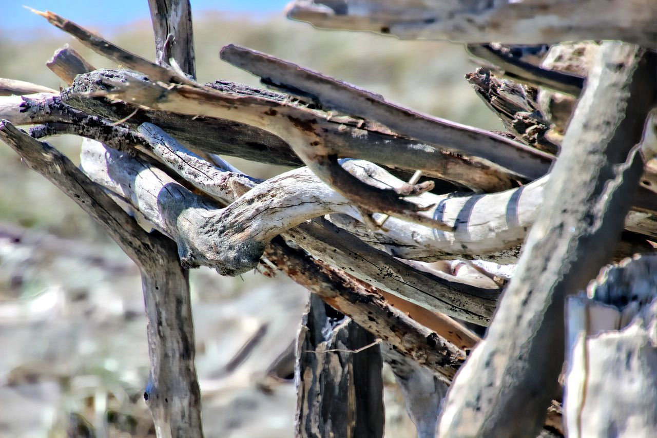 Animal Themes Beauty In Nature Branch Close-up Day Drift Wood  Drift Wood On Beach Intertwined Nature No People Outdoors Sky Tree Tree Trunk