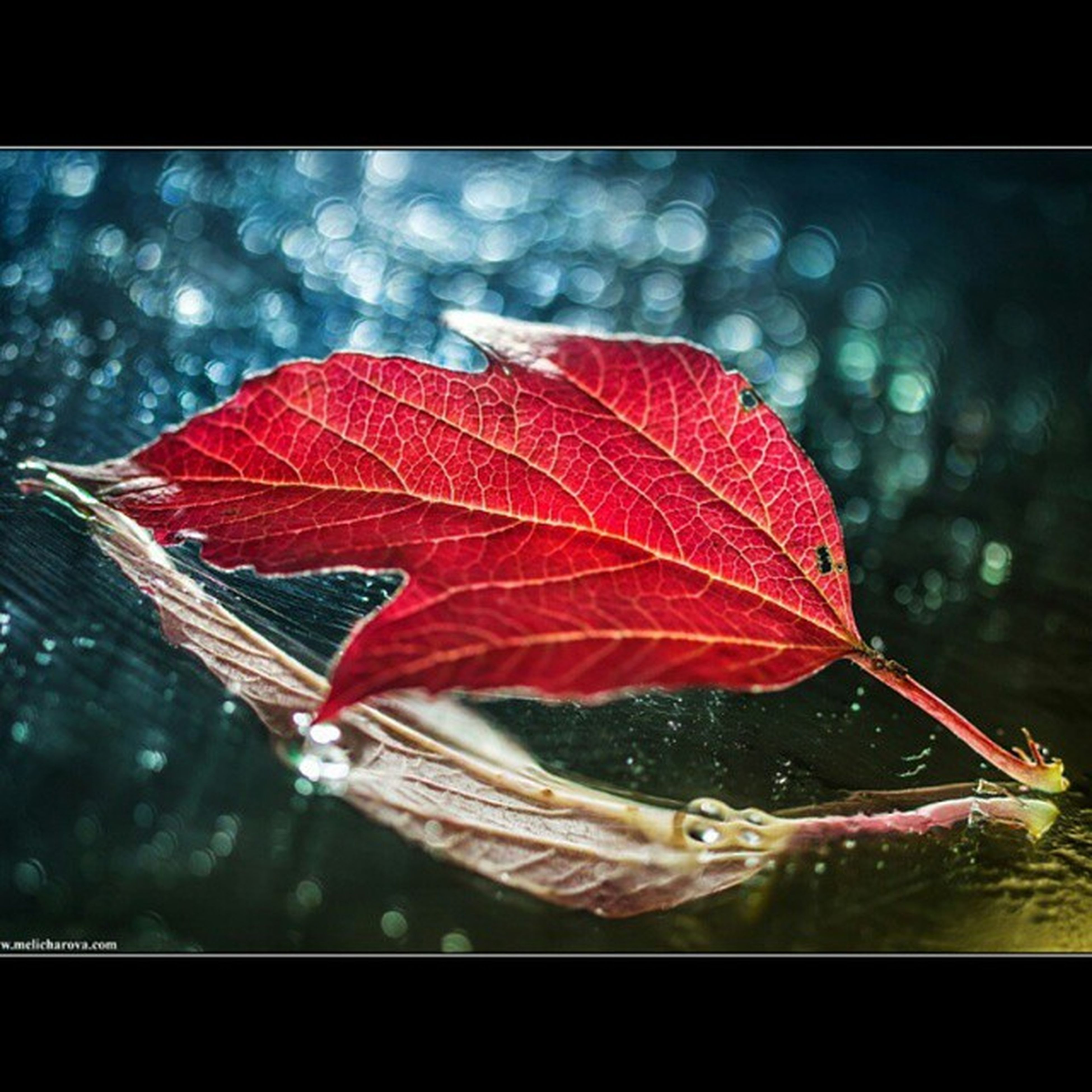 transfer print, red, auto post production filter, close-up, focus on foreground, water, umbrella, outdoors, day, nature, maple leaf, autumn, season, sky, leaf, selective focus, orange color, unrecognizable person
