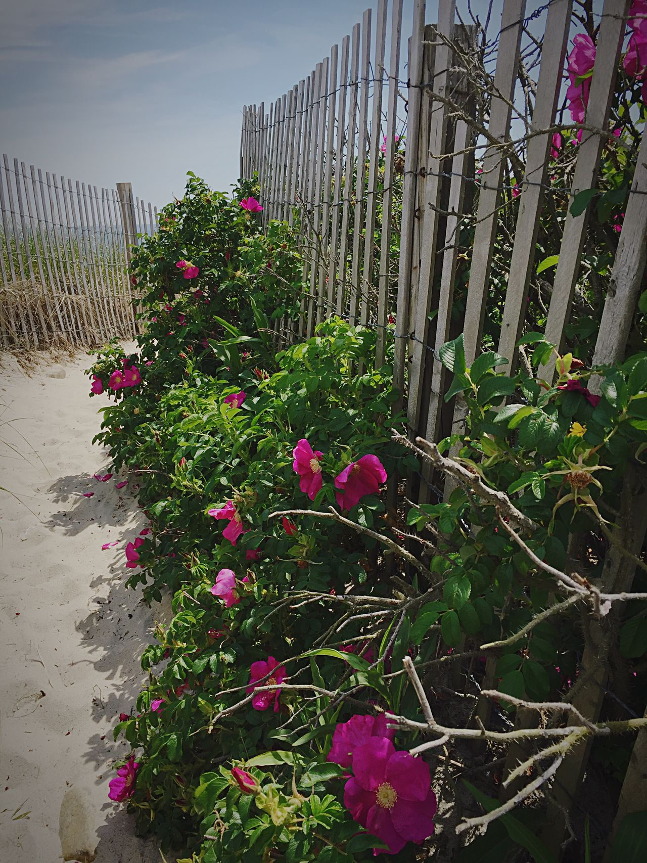 Flower Outdoors Growth Protection No People Plant Day Nature Sky Architecture Nature Close-up Sea Relaxation Beach Rose Beach Sand Beauty In Nature The Great Outdoors - 2017 EyeEm Awards