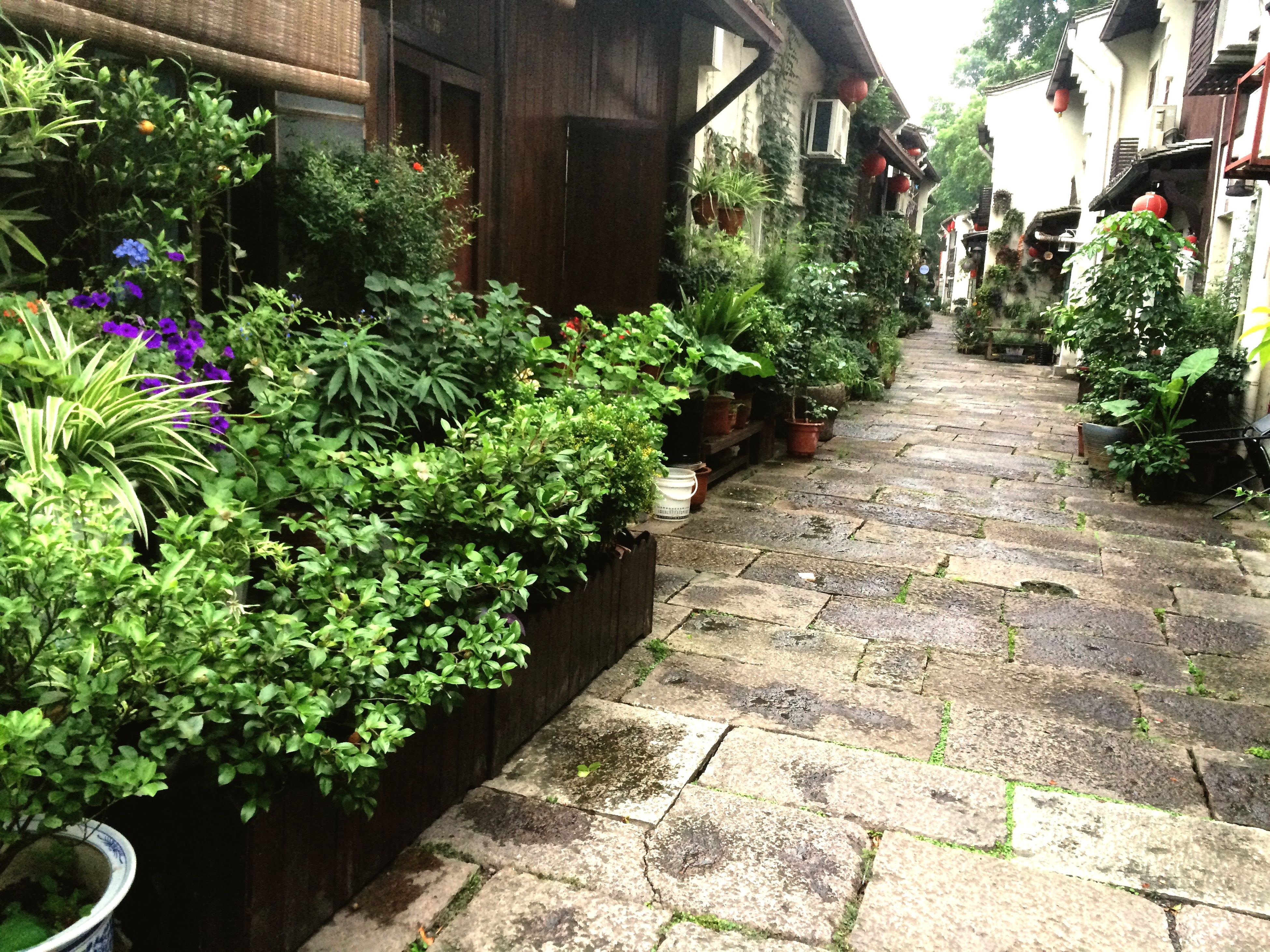 built structure, architecture, plant, building exterior, growth, potted plant, house, tree, flower, green color, the way forward, formal garden, outdoors, cobblestone, day, wall - building feature, no people, steps, footpath, leaf