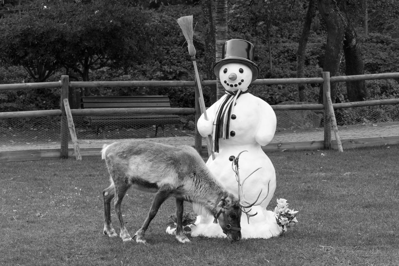 Reeindeer Snow Man Animal Themes Black & White Black And White Animals Black And White Photography Close-up Blackandwhite Blackandwhite Photography Bnw Eye4photography  Snowman EyeEm EyeEm Best Shots EyeEm Bnw EyeEmBestPics Monochrome Reindeers Chistmas Time From My Point Of View EyeEm Gallery Taking Photos Portugal