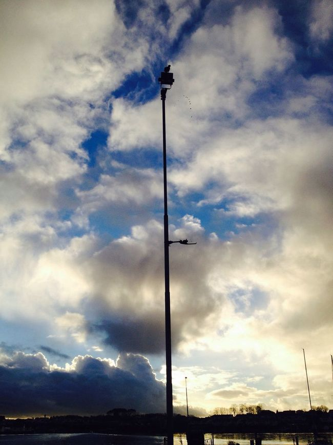 Watch up, poop coming down Norway Sky_collection Birds Nordic Light