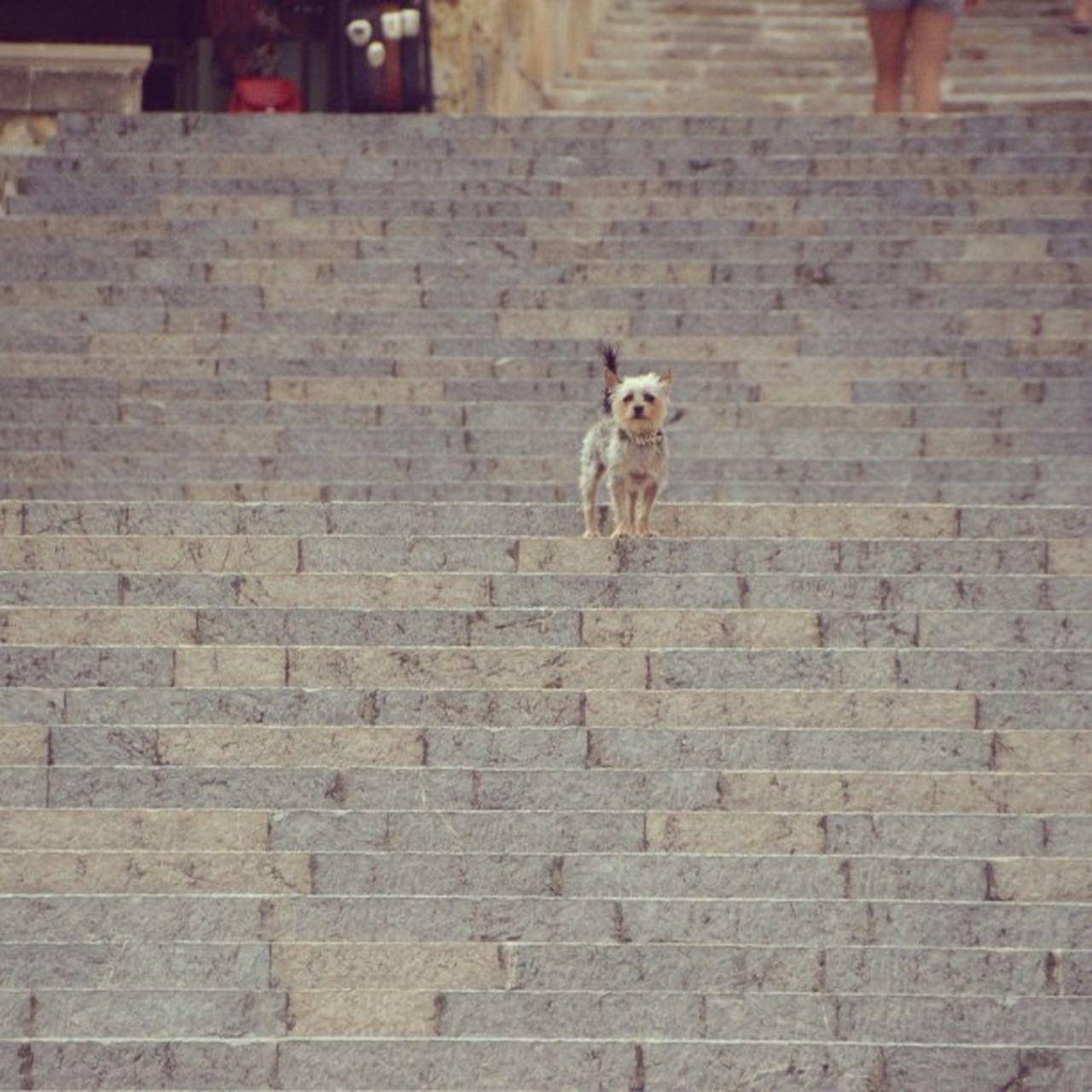 Cutest Dog Dogdays Hot Summer Vacation Holiday Holidays SPAIN Mallorca Island España Animal Pet Love Instadogs Dogsofinstagram Dogotd POTD Dailydog Dogstagram Colors Photography Nikon Happy stairs toninton