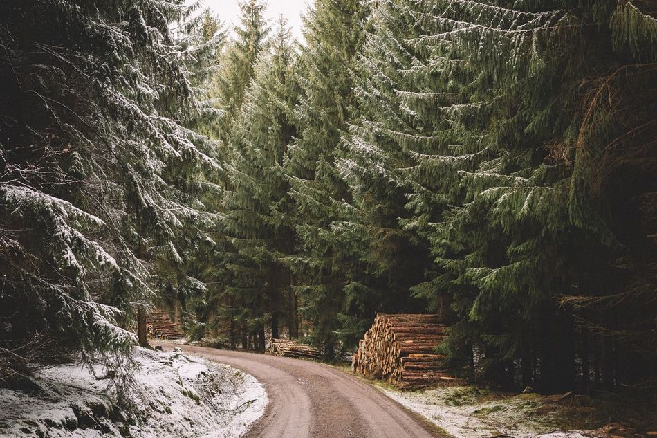 Beautiful stock photos of germany, Beauty In Nature, Cold Temperature, Day, Deforestation