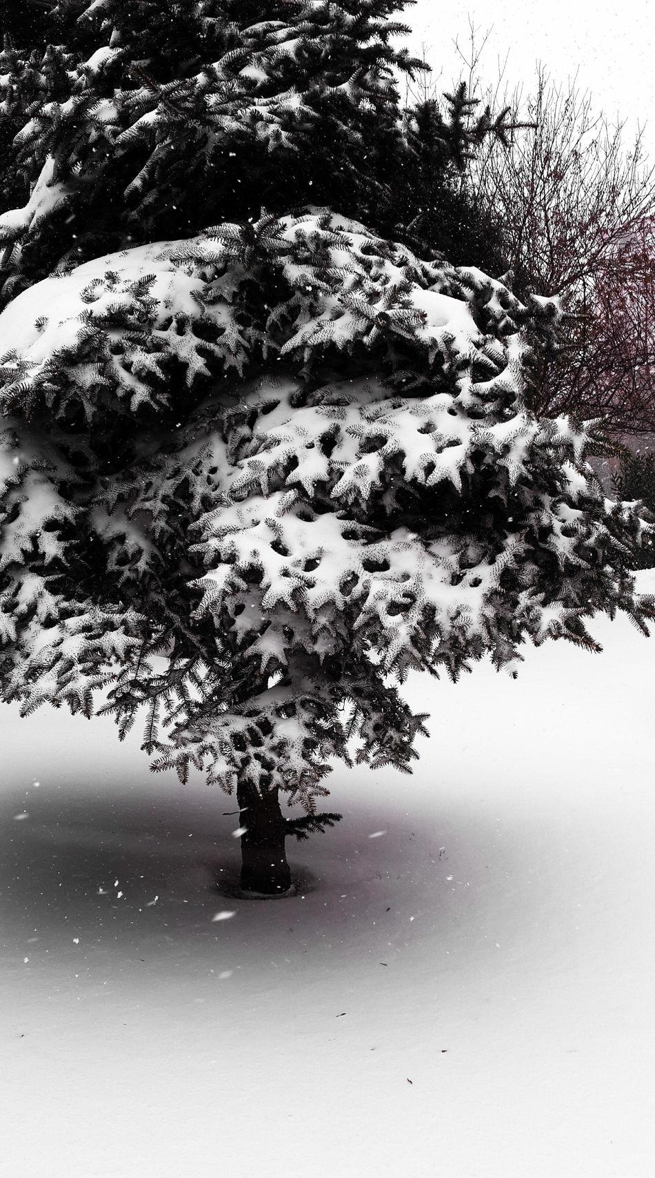 What a beauty 😍 Photooftheday VSCO Eye4photography  Bestoftheday Kar Eyeem Turkey EyeEm Best Shots Enjoying Life Snow