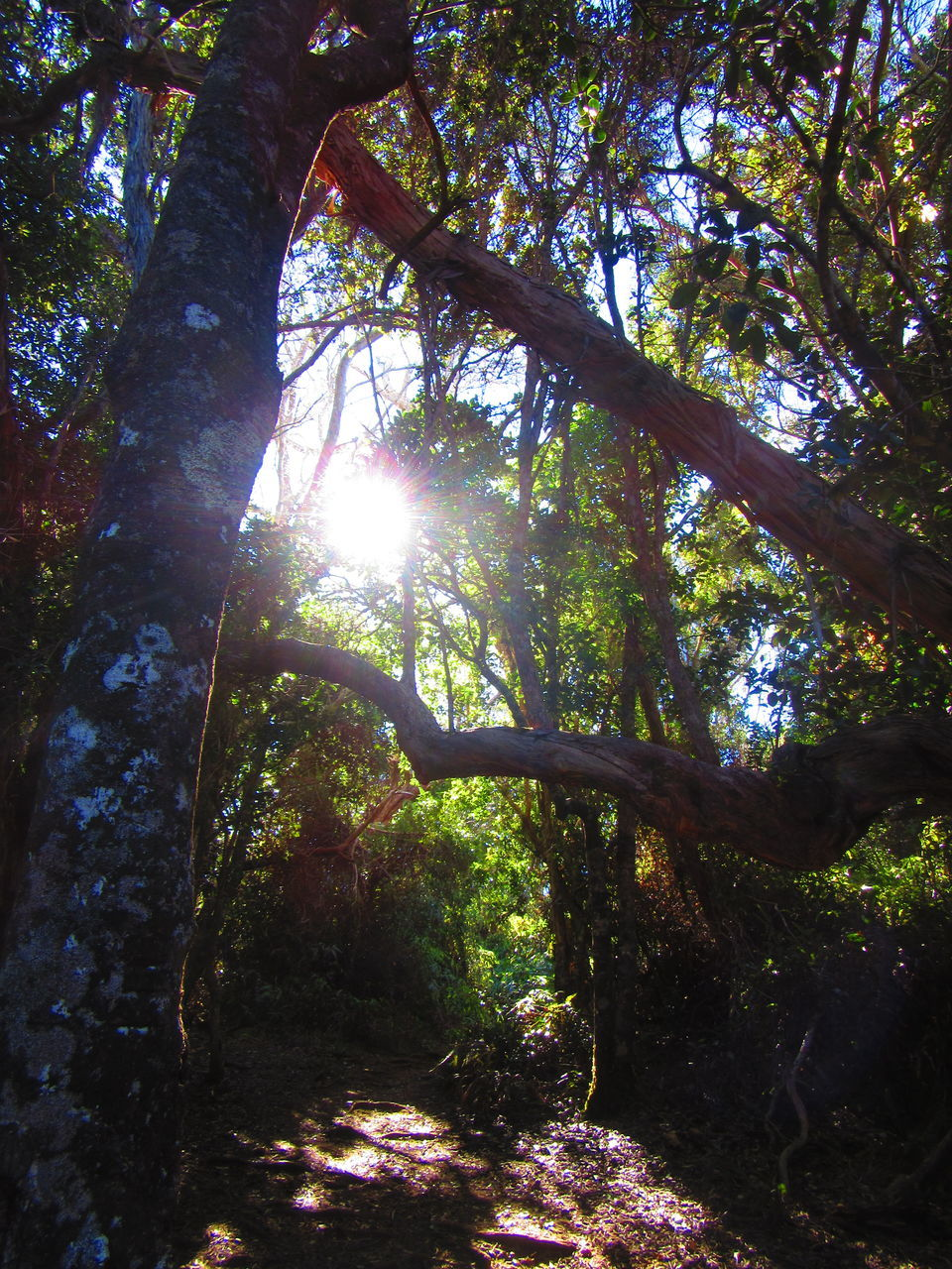 tree, nature, tranquility, sunlight, tranquil scene, sunbeam, forest, growth, beauty in nature, day, branch, no people, tree trunk, scenics, outdoors, low angle view