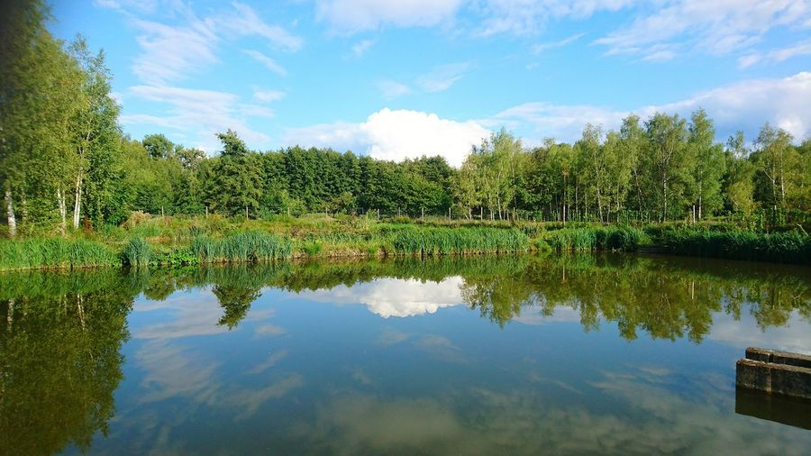 Beim Fisch-Otto in LangelsheimReflection Water Cloud - Sky Tree Lake Sky Outdoors Scenics Nature Day Beauty In Nature No People