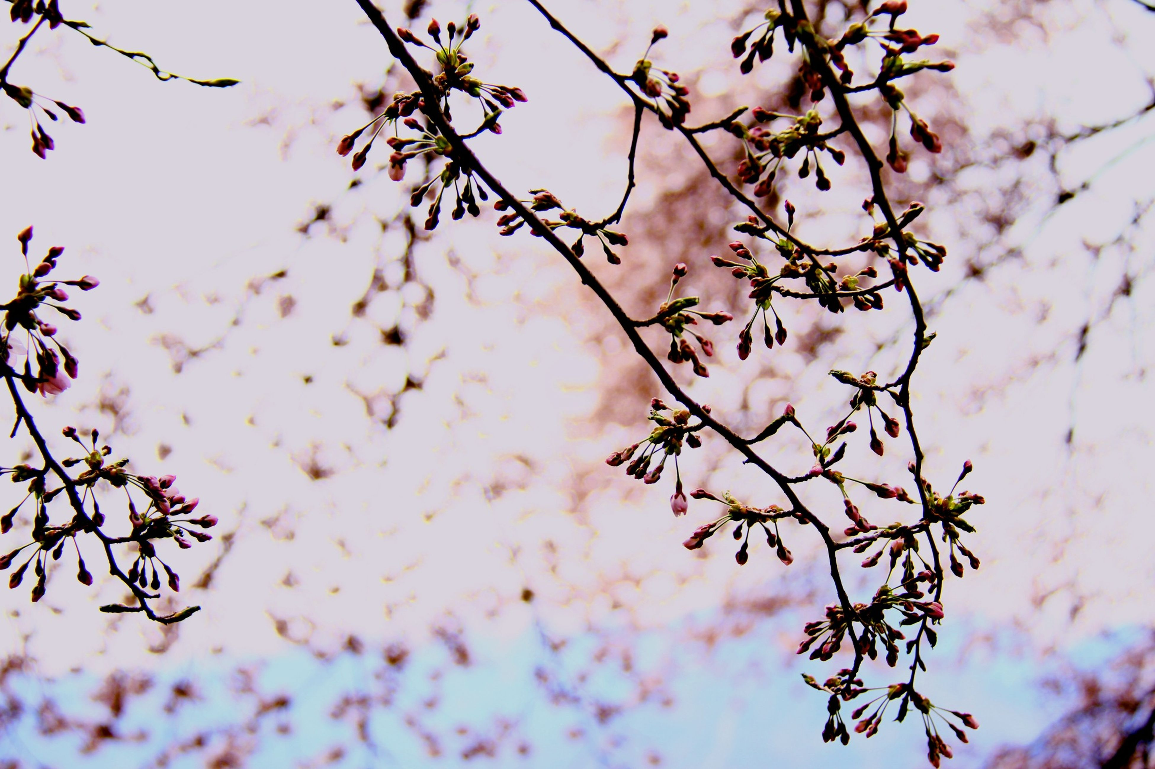 branch, growth, twig, tree, focus on foreground, nature, close-up, leaf, plant, beauty in nature, freshness, season, stem, low angle view, selective focus, sky, autumn, tranquility, outdoors, flower