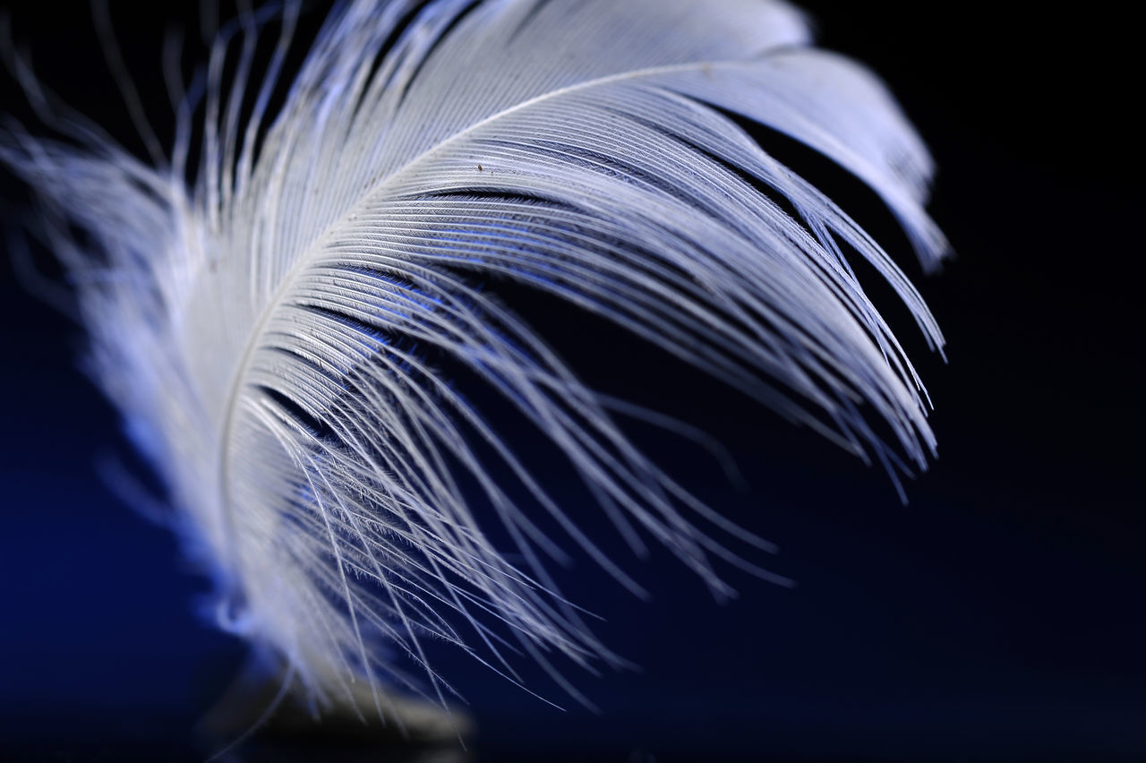 Bird Feather Close-up Day Feather  Feather In The Wind Indoors  Motion No People Pattern Studio Photography