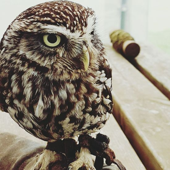 Owllife Owls💕 Owl Photography