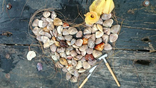 HongKong Beach Flowers Clams Clamshell Digging In The Sand Woodtable Outdoor Camping Summer Eat Barbecue