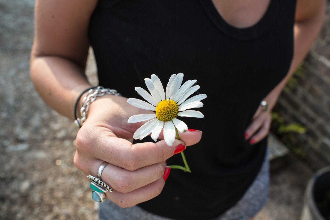 Beautiful stock photos of jewelry, Black Color, Bracelet, Chamomile, Close-Up