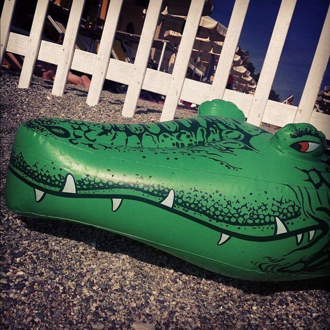 Crocodile on the beach...