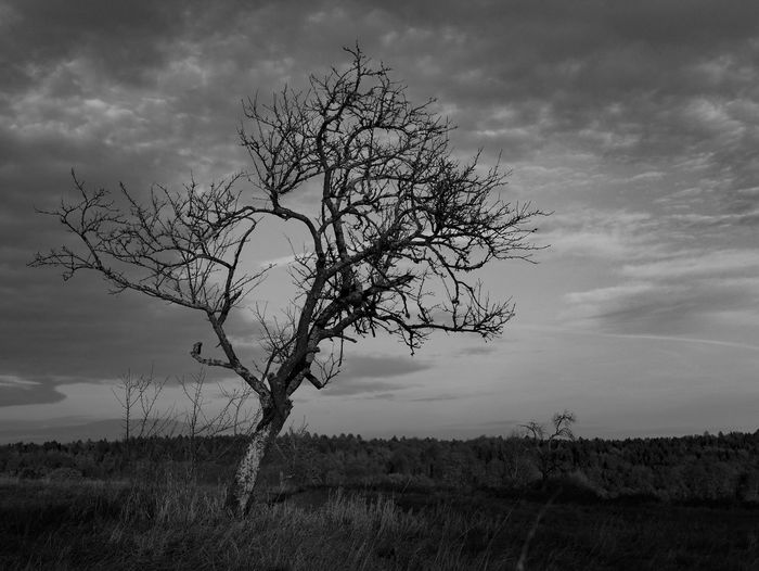 Botany Plant Grass Landscape Nature Cloud - Sky Black And White Tree Field Outdoors Sky Autumn Monochrome