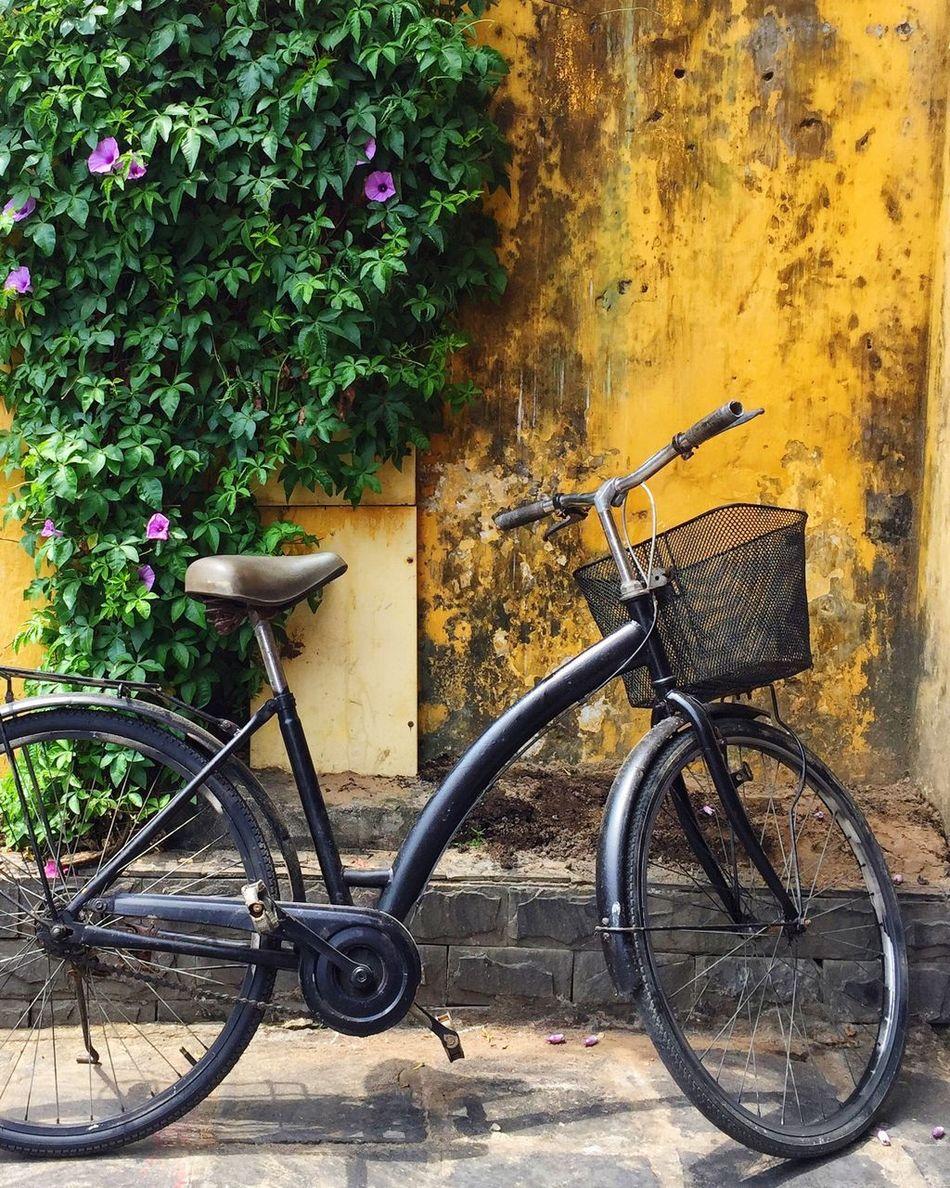Hoi An, Vietnam Bicycle Transportation Wall Textures Bicycle Parking Hoi An Vietnam Streetphoto_color Streetphotography Travel Photography