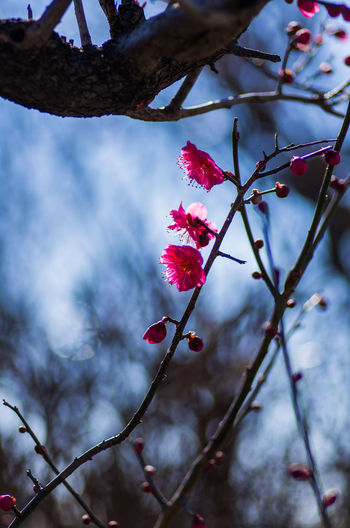 Beauty In Nature Branch Close-up Day Flower Flower Head Focus On Foreground Fragility Freshness Growth Low Angle View Nature No People Outdoors Petal Pink Color Plant Red Rose Hip Sky Springtime Tree Twig Winter