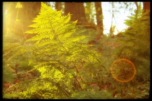 Fern Silhouette Woodland Walk Showcase: February Nature On Your Doorstep Lady Dixon Park Belfast Creative Light And Shadow Woodlands Trail Bright Light In The Woods Woodland Fern Trees Nature_collection Woodlands EyeEm Gallery EyeEm Nature Lover Sunlight On The Forest Floor Backgrounds Background Our Best Pics Nature At Its Best Magical Ireland Nature_perfection The Great Outdoors - 2016 EyeEm Awards Showing Imperfection Natures Diversities