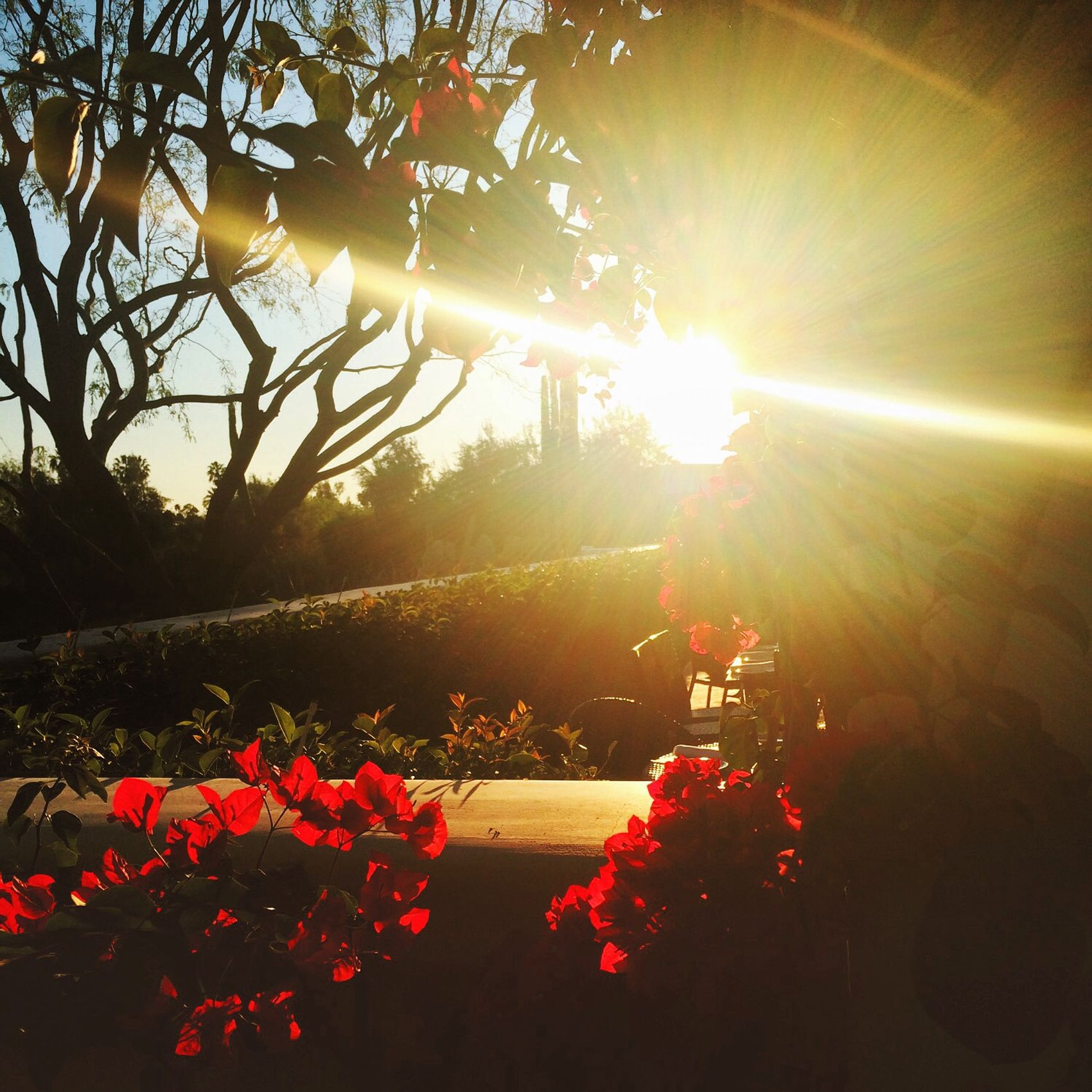 Sunset Sunfoods Arizona