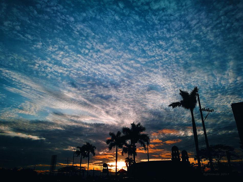 Tree Sky Nature Palm Tree suunrise