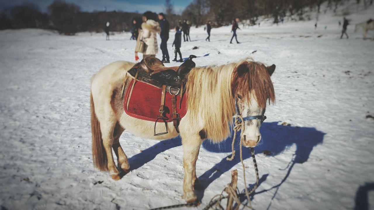 Horse Snow Winter Animal Photography Cold Temperature Winter Day People Walking  Dajti Telepheric Tirana Albania EyeEm
