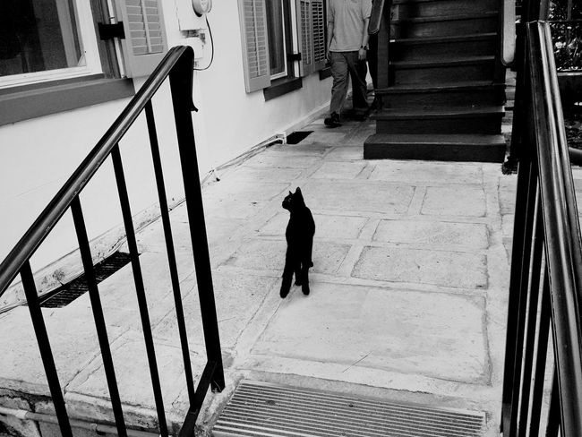 Cat Cats Of EyeEm Streetphotography Blackandwhite Black & White EyeEm Best Shots Open Edit Eye4photography