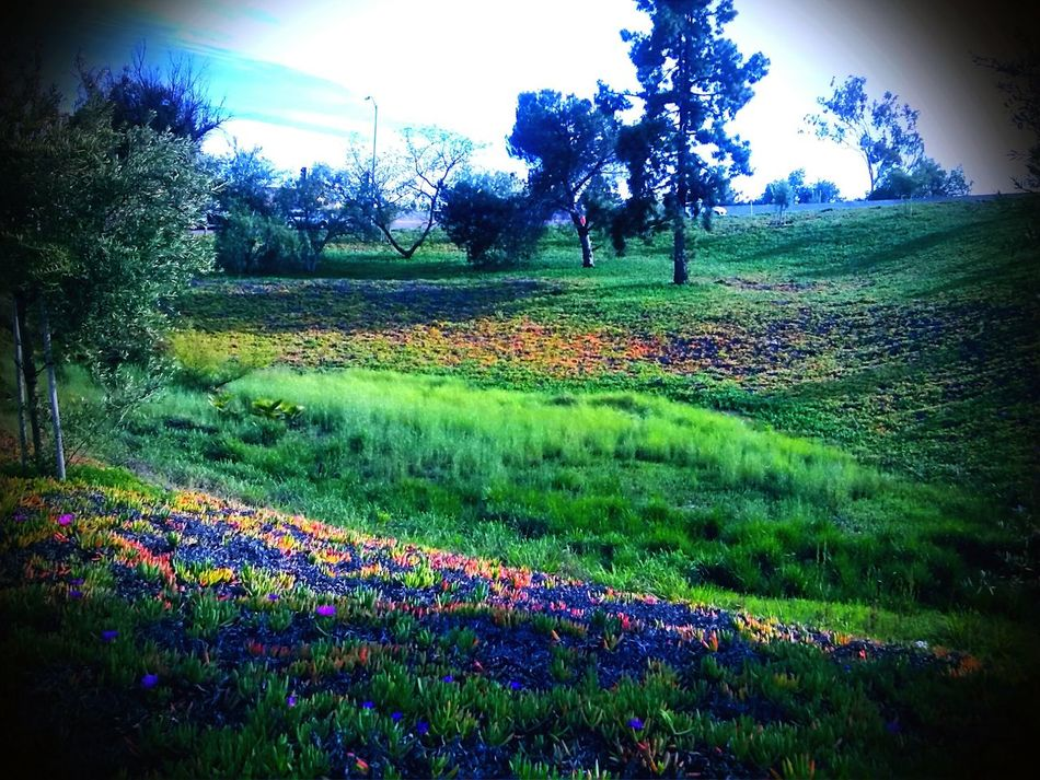 Natures Canvas Field Of Dreams Nature Is Art Tranquil Scene Simple Beauty Colorful Where It Counts Blue Flowers Yellow Flowers Calming View Nature Soothes Unexpected Inspiration EyeEm Nature Lover