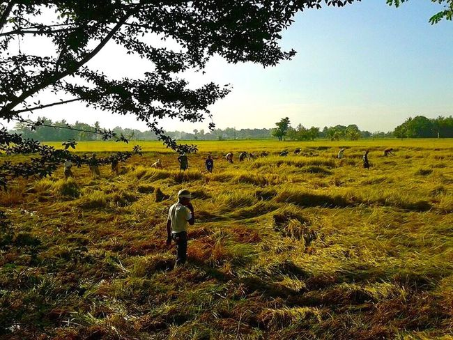 Rice Field Farming Farmer Rice Farming Philippines Malolos Bulacan Morning Sunrise Landscape_Collection Landscape