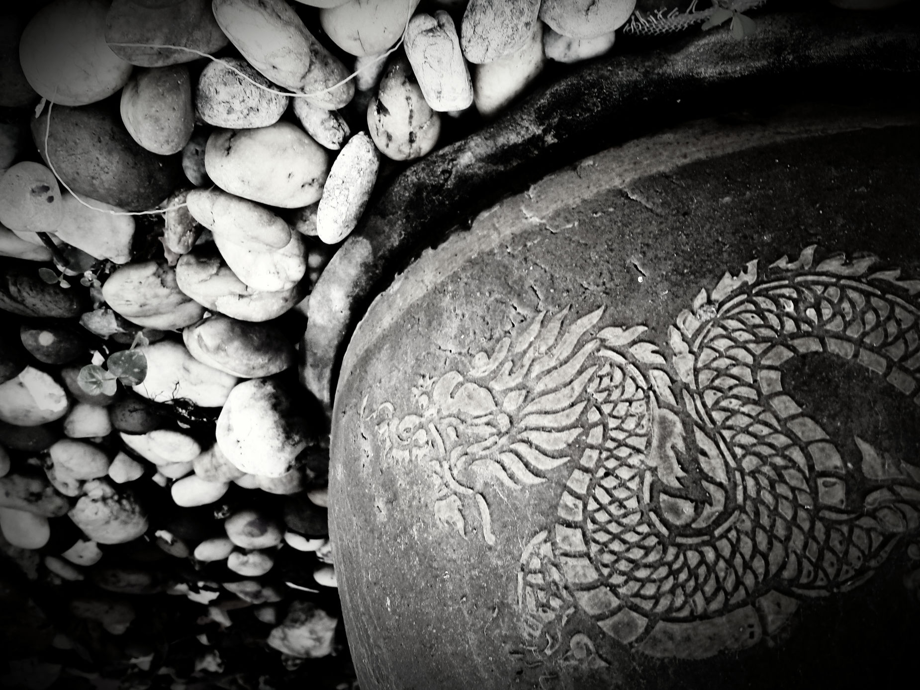 Textures And Surfaces Black And White Monochrome Art In The Garden
