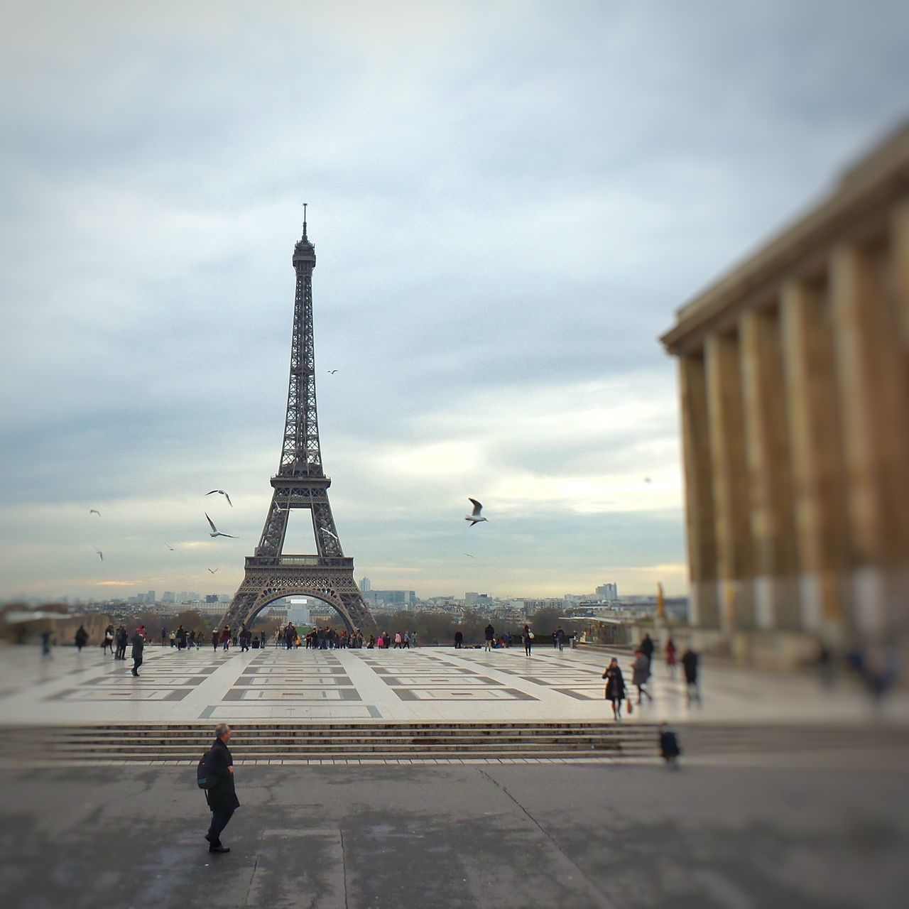 Embrace Urban Life Paris is a Seagull Flight of Freedom City Travel Destinations Cloud - Sky Sky Cityscape People Outdoors City Town Monuments Of The World Streetphotography Monuments France Fragility Happiness Autumn My Year My View Autumn Colors Cold Temperature Light And Shadow