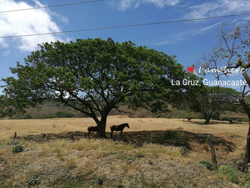 Nofilter Costarica Outdoors Nature Pura Vida ✌ Guanacaste  BahíaSalinas arboldeGuanacaste Landscape Scenics Guanacaste  Vacations Beauty In Nature