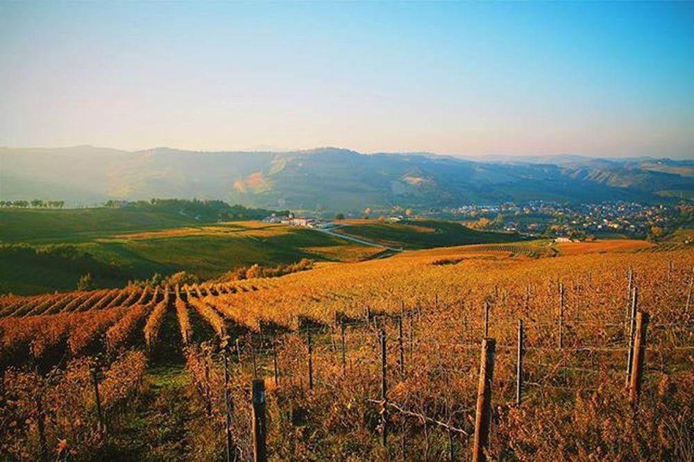Romagna , my land , Italy . Autumn 2015 VSCO Canon Autumn Landscape Romagna Wineyards Igers Igersfc Natgeo Drmdealer