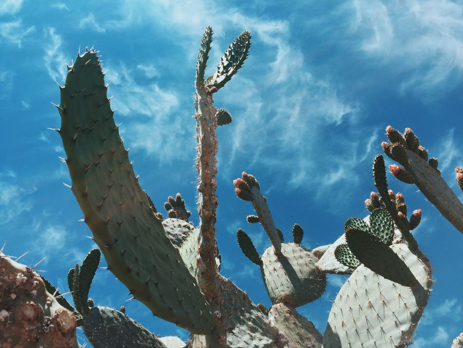 Beautiful stock photos of america, Blue, Cactus, Cloud - Sky, Day