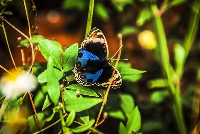 Butterfly Nature Natgeo Kupukupu Beauty Nikon D80 Iamnikon Nikontop Shot