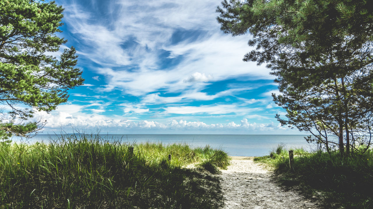 tranquil scene, nature, tranquility, beauty in nature, scenics, grass, sea, day, water, no people, outdoors, growth, idyllic, sky, tree, cloud - sky, horizon over water, beach, landscape, plant