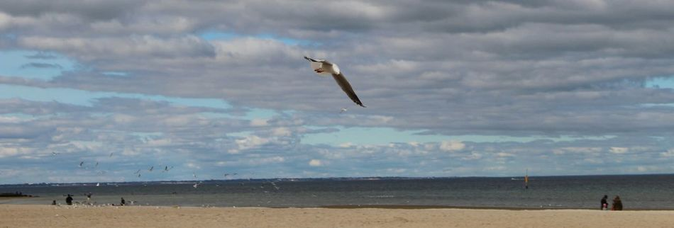 Have a awesome week ahead 😎 EyeEm Best Shots Eye4photography  Life Is A Beach ! T H E Purist (no Edit, No Filter) The Purist (no Edit, No Filter) Beach Photography Birds Ladyphotographerofthemonth Landscape Being A Beach Bum