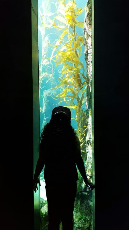 Learning Science Ecosystem  Water Kelp Pondering Through The Glass Science Museum  California Science Center Field Trip Darkness And Light My Girl