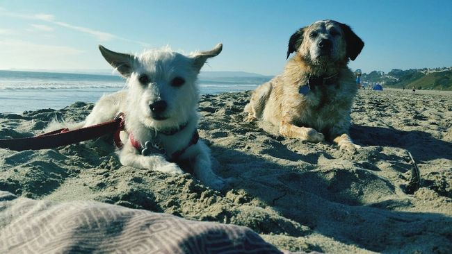 seascape Mutts on the Beach
