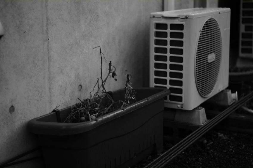 The morgue My Photography Voigtlnder X-Pro1 Fujifilm X-Pro1 Voightlander Nokton Classic 40mm/F1.4 SC Japanese  Japan Plants Plant Fan Planter Planters Plants 🌱 Dead Monochrome Black & White Black And White Photography B & W  EyeEm Best Shots - Black + White B & W Photography Black And White