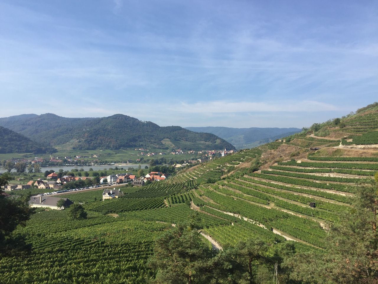 Agriculture Rural Scene Farm Landscape Mountain Crop  Cultivated Land Field High Angle View House Plantation Growth Tranquil Scene Sky Green Color Village Scenics Travel Destinations Rice Paddy Tranquility Donau Wachau