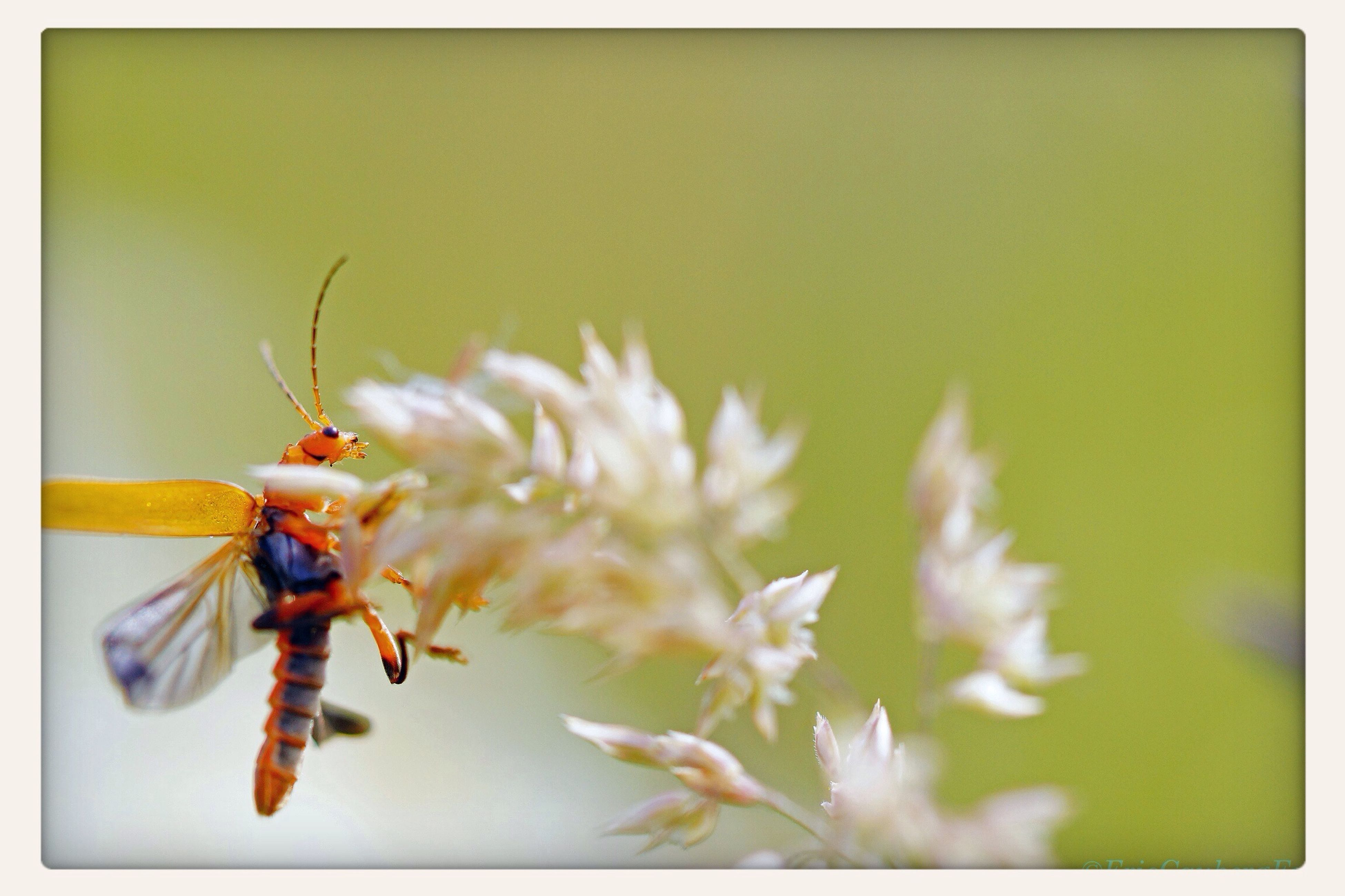 Bug Macro Close Up ready to depart... Popular Photos