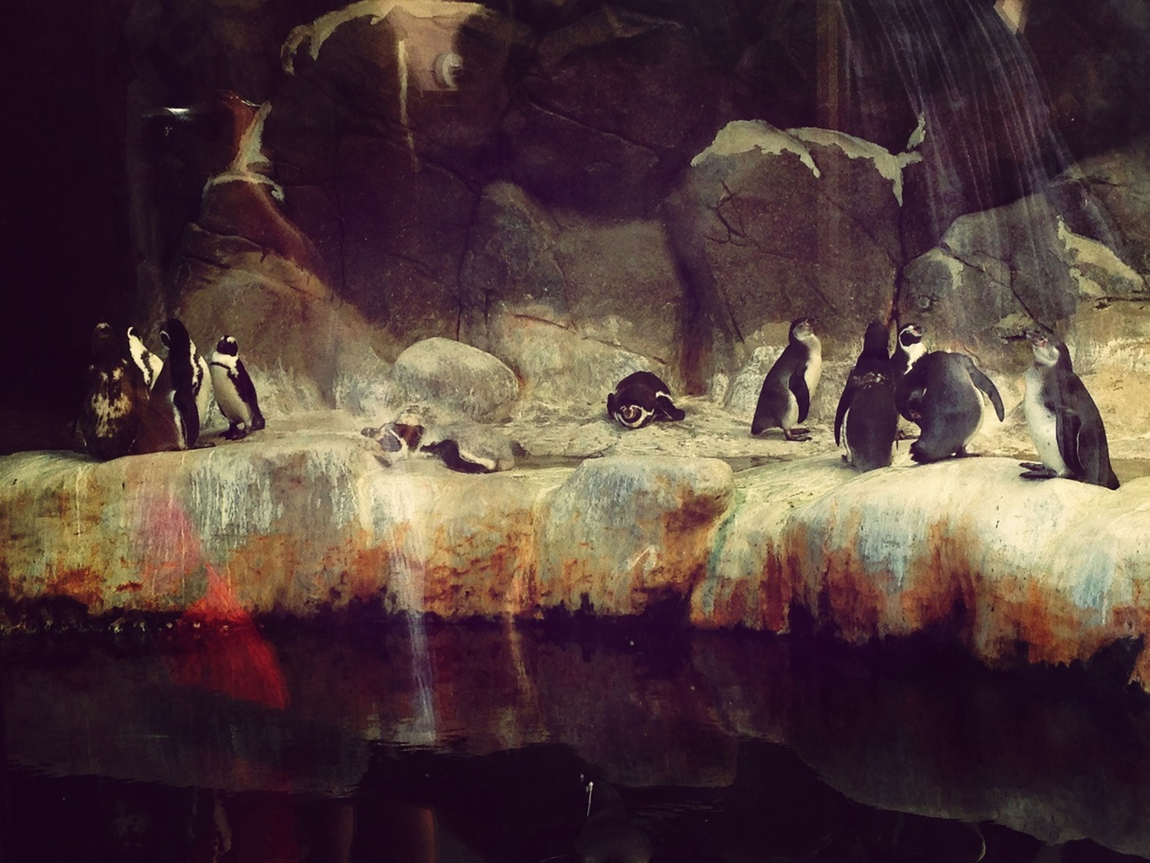 indoors, men, rock - object, day, medium group of people, cave, rock formation, animal themes, sunlight, large group of people, high angle view, deterioration, shadow, nature, weathered
