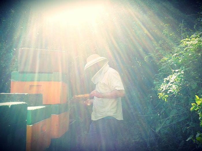 Bienen  Imkerei meise3 Juni Zwanzig15 Schleswigholstein