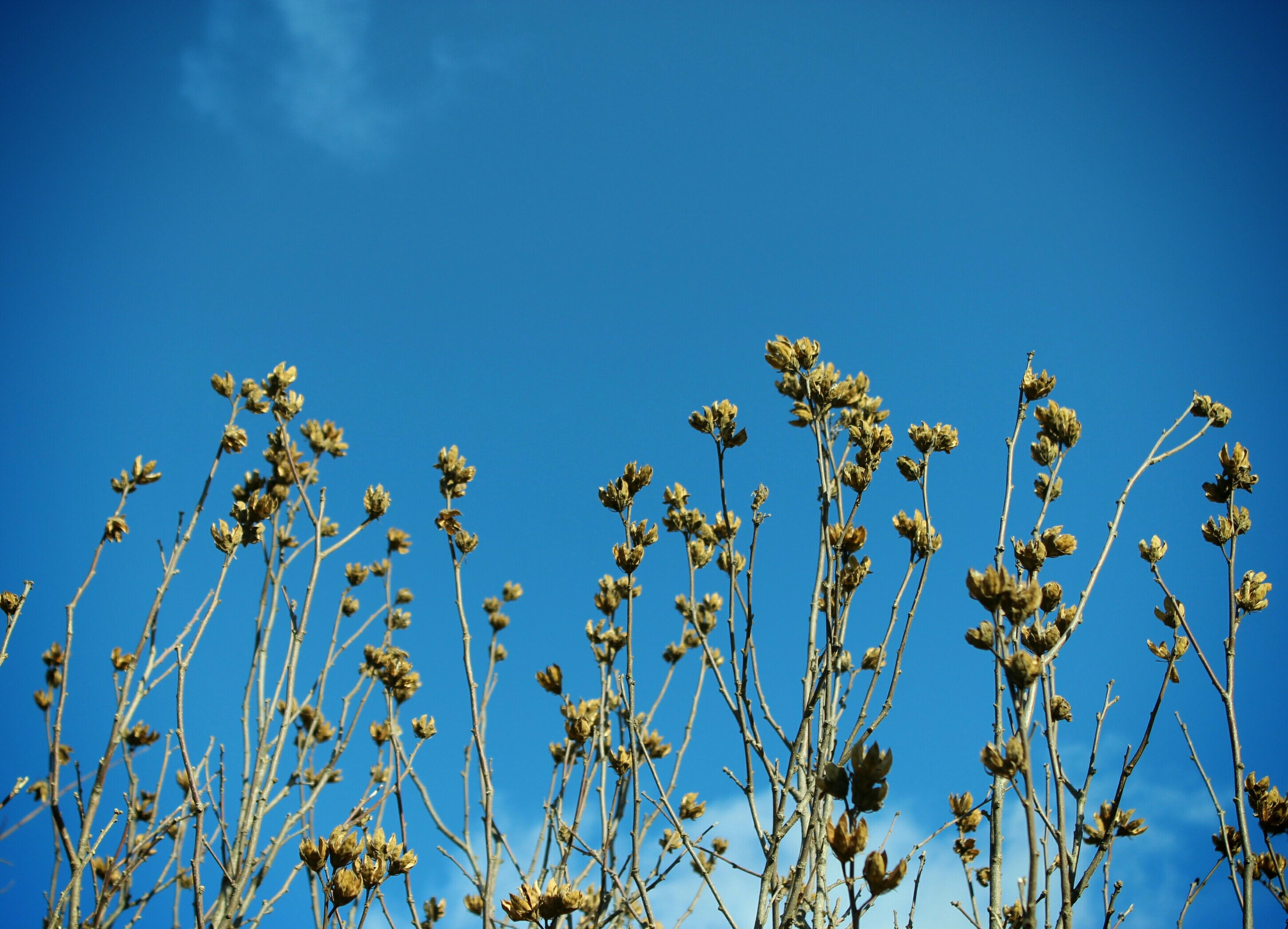 blue, clear sky, low angle view, growth, copy space, nature, beauty in nature, flower, plant, freshness, leaf, sky, tranquility, branch, high section, outdoors, day, no people, tree, stem