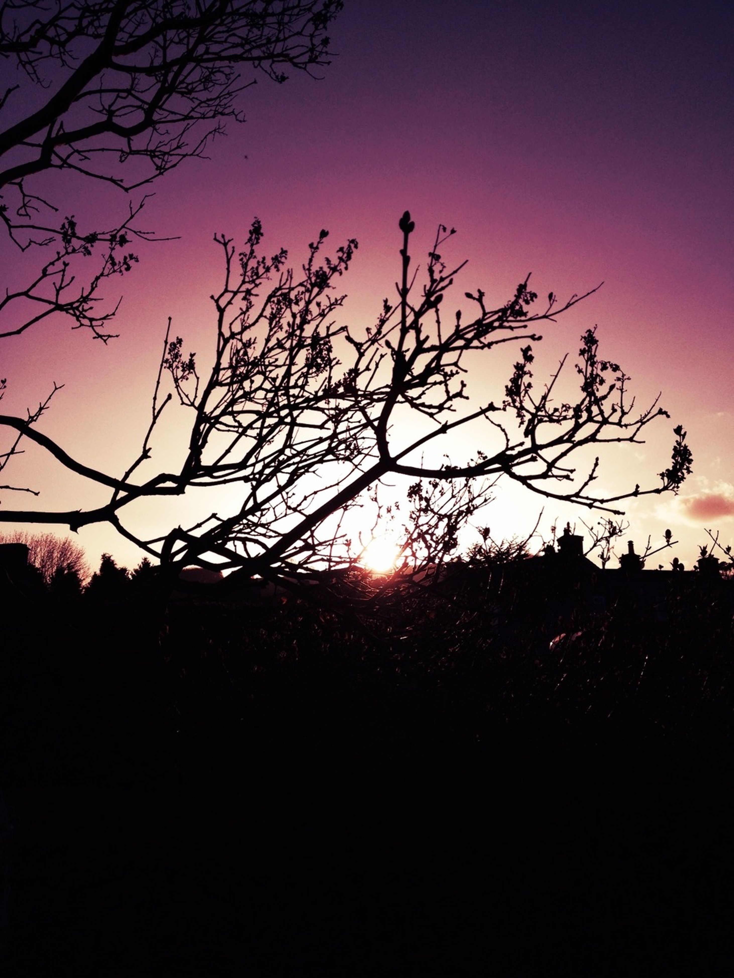 silhouette, tree, sunset, tranquility, branch, bare tree, beauty in nature, tranquil scene, clear sky, scenics, nature, sky, copy space, low angle view, dark, idyllic, outline, sun, landscape, growth