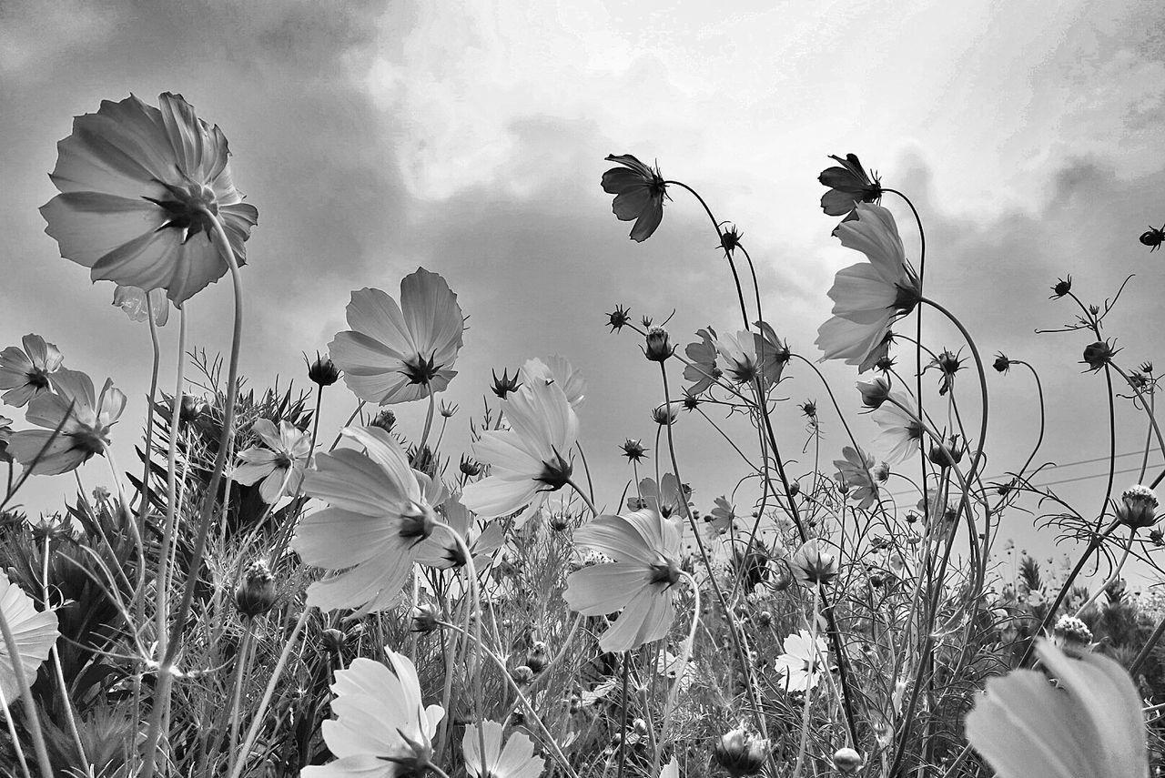 Beautiful stock photos of meadow, Abundance, Auto Post Production Filter, Cloud, Day